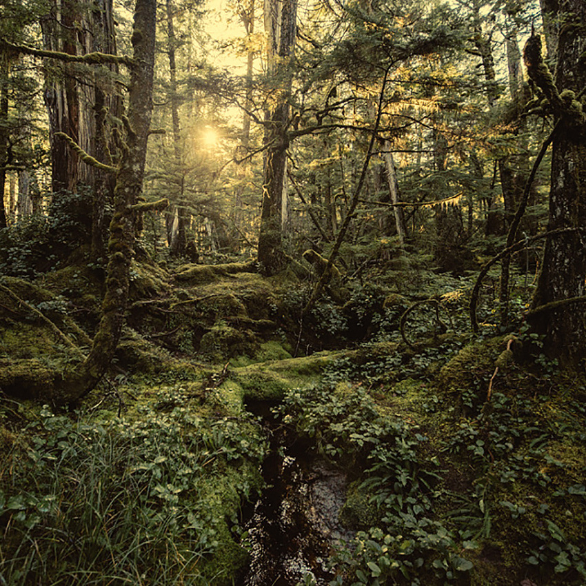 Temperate Rainforest of BC